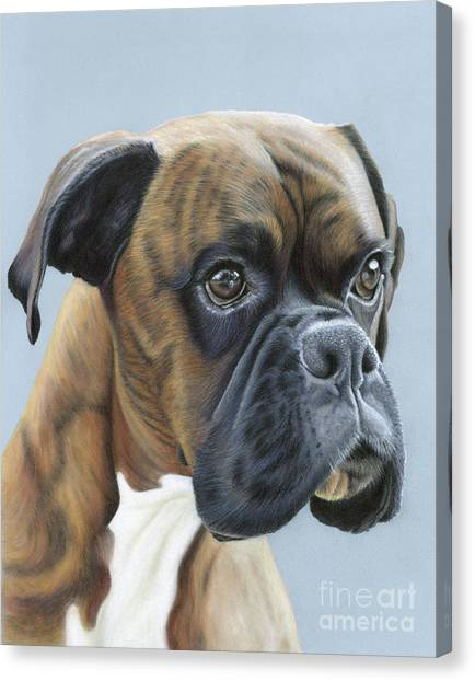 Canvas Print featuring the painting Brindle Boxer Dog - Jack by Donna Mulley