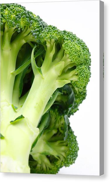 Broccoli Canvas Print - Broccoli by Gaspar Avila