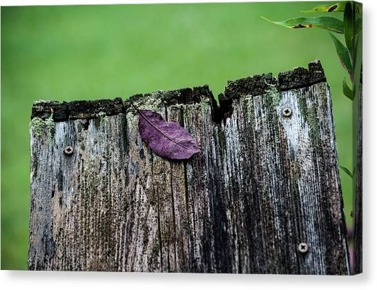 Brock's Leaf Canvas Print