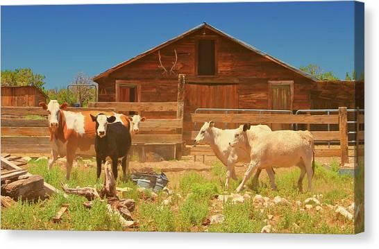Broken Corral Winona Arizona Canvas Print by Gus McCrea