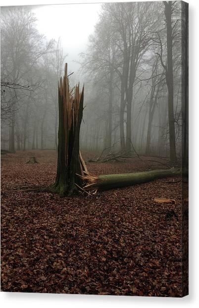 Broken Oak Canvas Print