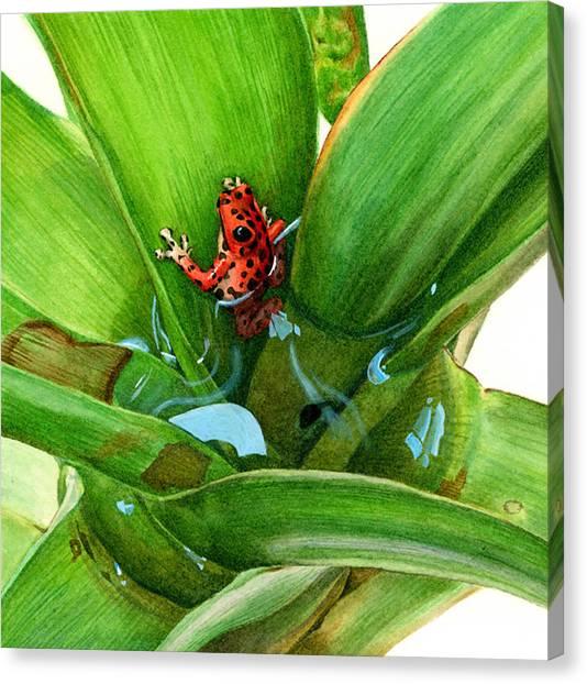 Canvas Print - Bromeliad Microhabitat by Logan Parsons