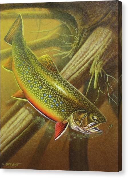 Fly Fishing Canvas Print - Brook Trout Cover by JQ Licensing