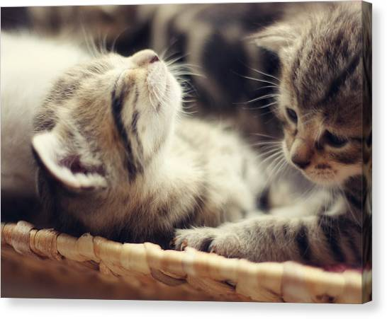 Gallery Wrap Canvas Print - Brotherly Love by Amy Tyler