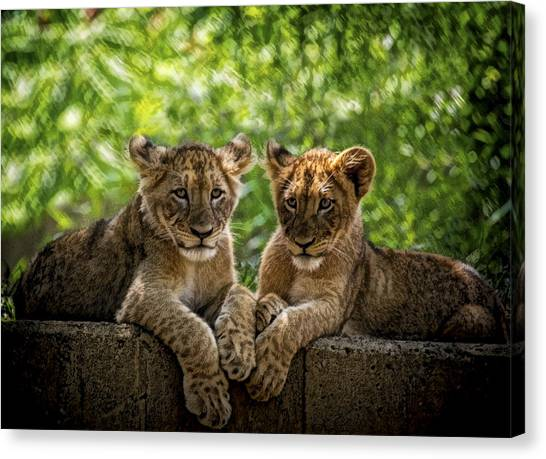 Brothers Chillin Canvas Print