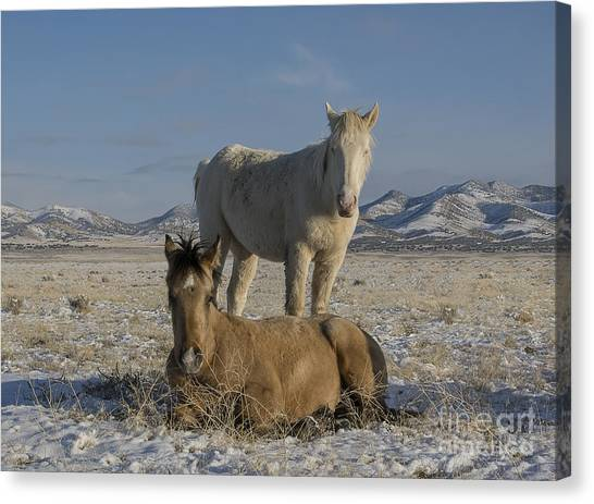 Brother's  Canvas Print by Nicole Markmann Nelson