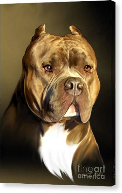 Pit Bull Canvas Print - Brown And White Pit Bull By Spano by Michael Spano