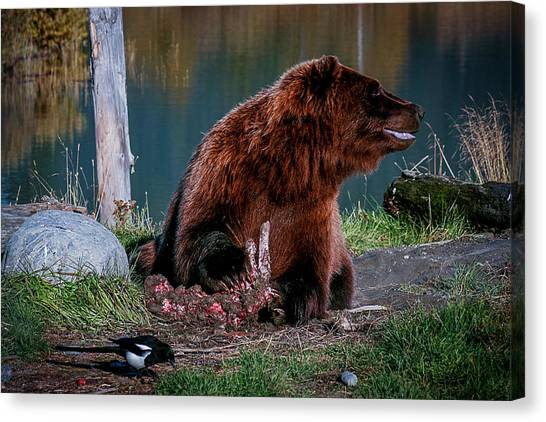 Brown Bear And Magpie Canvas Print