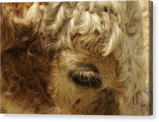 Brown Eyes Canvas Print