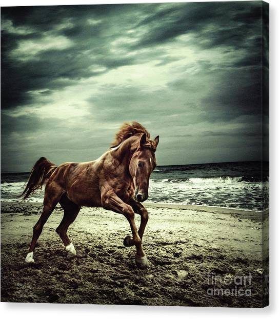 Brown Horse Galloping On The Coastline Canvas Print