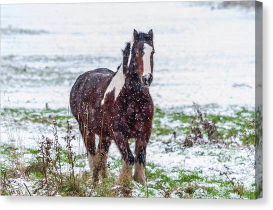 Canvas Print featuring the photograph Brown Horse Galloping Through The Snow by Scott Lyons