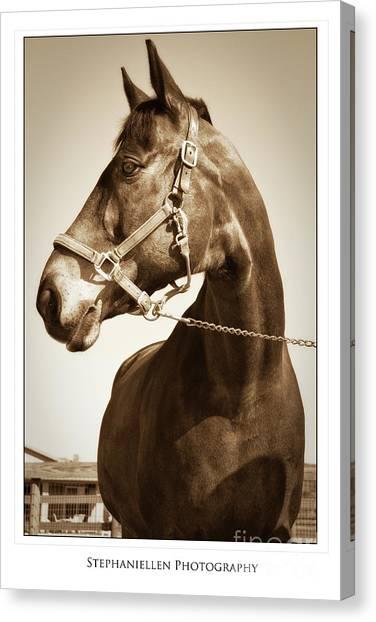 Brown Horse Canvas Print