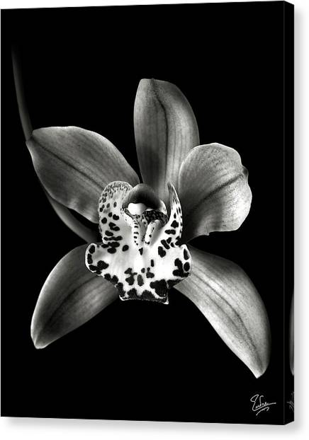 Brown Orchid In Black And White Canvas Print