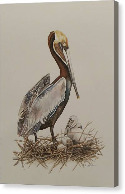 Brown Pelican And Chicks Canvas Print