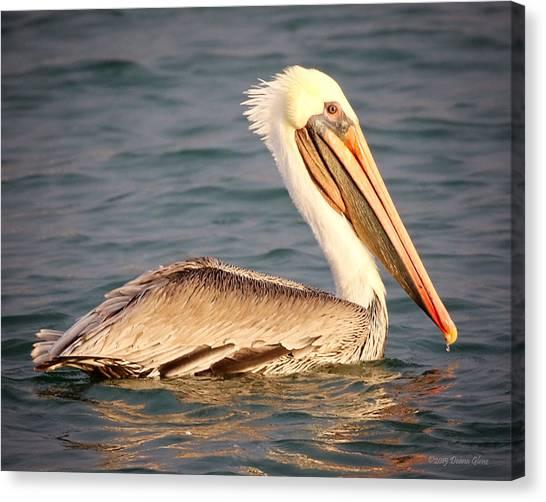 Brown Pelican Floating Canvas Print