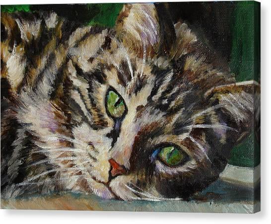 Brown Tabby Cat Canvas Print