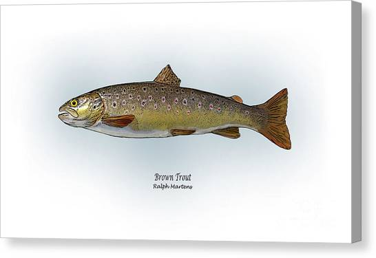 Sportfishing Canvas Print - Brown Trout by Ralph Martens