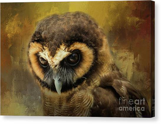 Brown Wood Owl Canvas Print