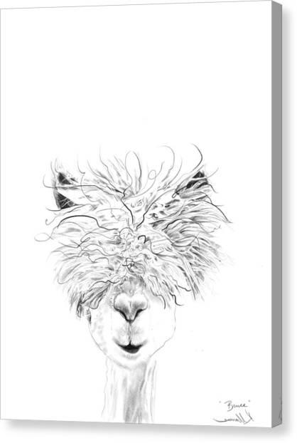 Llamas Canvas Print - Bruce by K Llamas