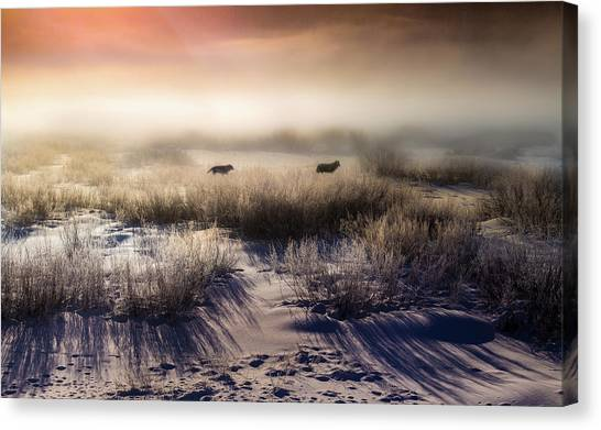 Canvas Print featuring the photograph Brumous Willow Bed // Greater Yellowstone Ecosystem by Nicholas Parker