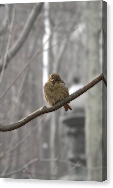 Bryant Park Bird Nyc Canvas Print