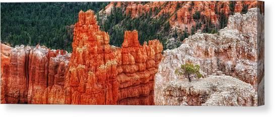 Bryce Canyon - Lone Tree Canvas Print