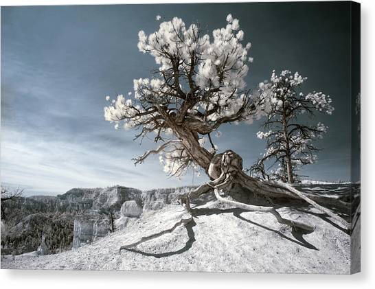 Bryce Canyon Infrared Tree Canvas Print