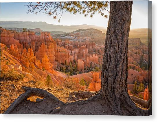 Canyon Canvas Print - Bryce Canyon National Park Sunrise 2 - Utah by Brian Harig
