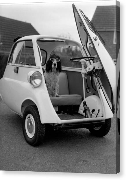Bubble Cars Canvas Print   Bubble Car With Dog By Bruce Wells