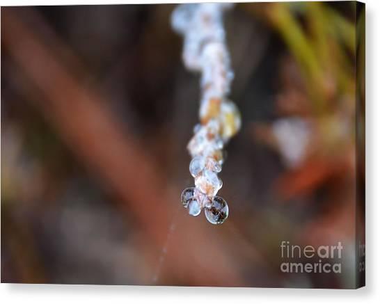 Bubble Eyed Water Drops- Loganville Georgia Canvas Print