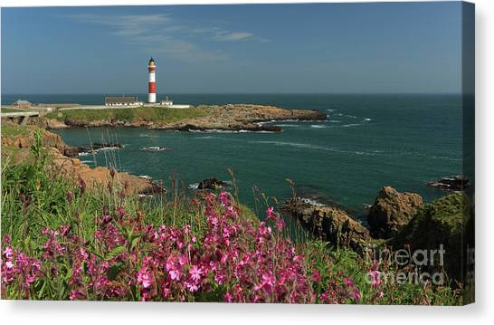 Buchan Ness Lighthouse And Spring Flowers Canvas Print