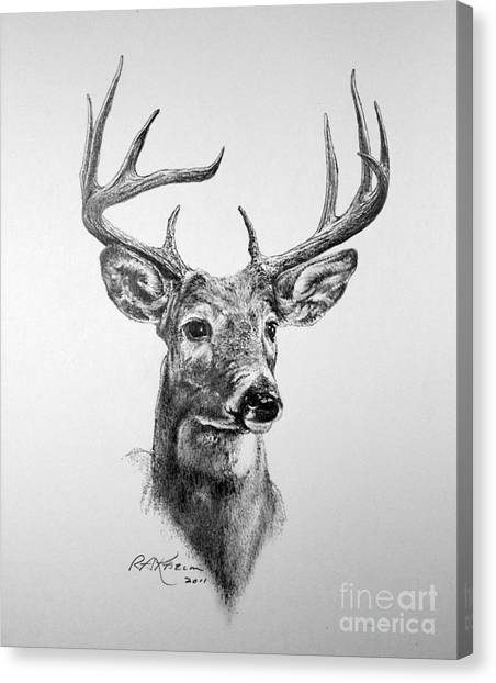 White-tailed Deer Canvas Print - Buck Deer by Roy Anthony Kaelin