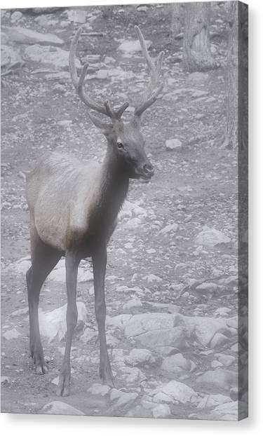 Stag Canvas Print - Buck In Fog On Hurricane Ridge - Olympic National Forest - Olympic National Park Wa by Christine Till