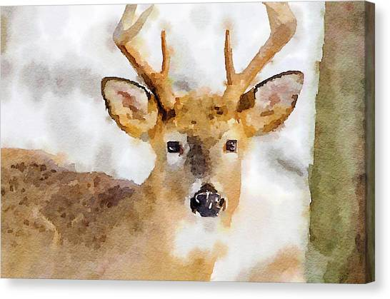 Buck Profile Canvas Print