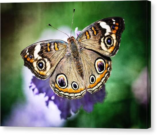 Buckeye Butterfly Canvas Print - Buckeye Butterfly  by Saija  Lehtonen
