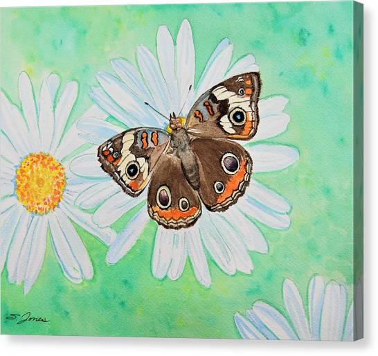 Buckeye On Oxeye Canvas Print