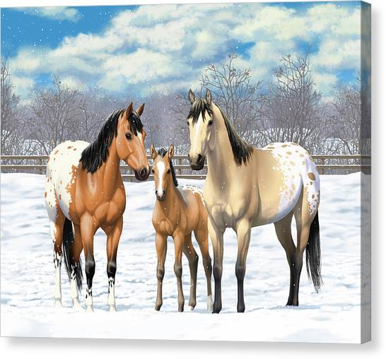 Dun Horse Canvas Print - Buckskin Appaloosa Horses In Winter Pasture by Crista Forest