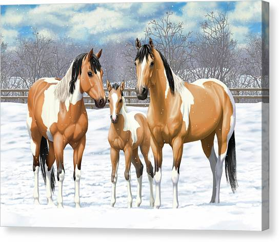 Dun Horse Canvas Print - Buckskin Paint Horses In Winter Pasture by Crista Forest