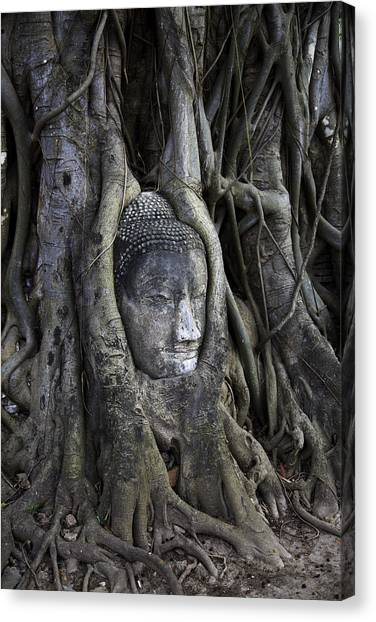 Buddha Canvas Print - Buddha Head In Tree by Adrian Evans