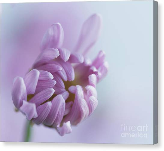 Budding Canvas Print