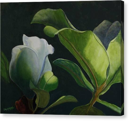 Budding Magnolia Canvas Print
