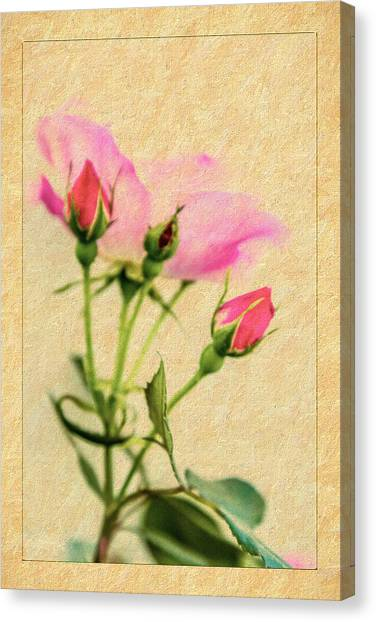Buds And Bloom - Rose Floral Canvas Print by Barry Jones