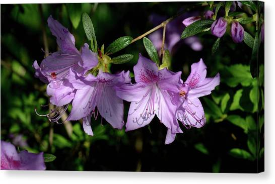 Canvas Print featuring the photograph Buds And Blooms by Angie Tirado