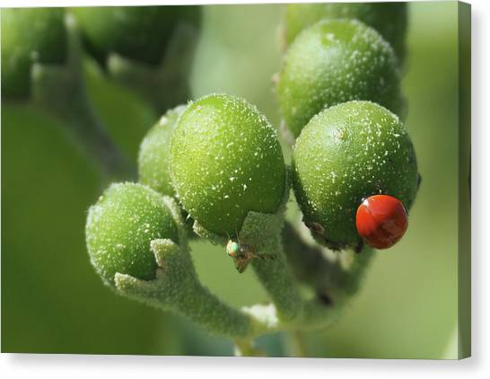Buds And Bugs Canvas Print