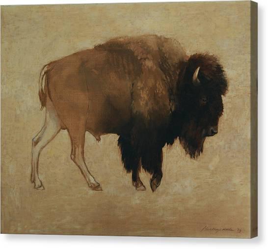 Buffalo Canvas Print
