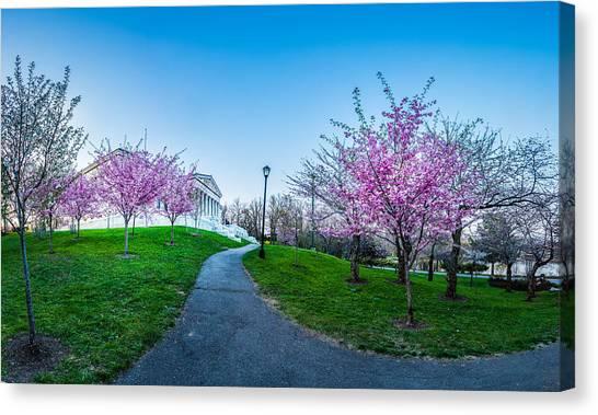Buffalo Cherry Blossoms 1 Canvas Print