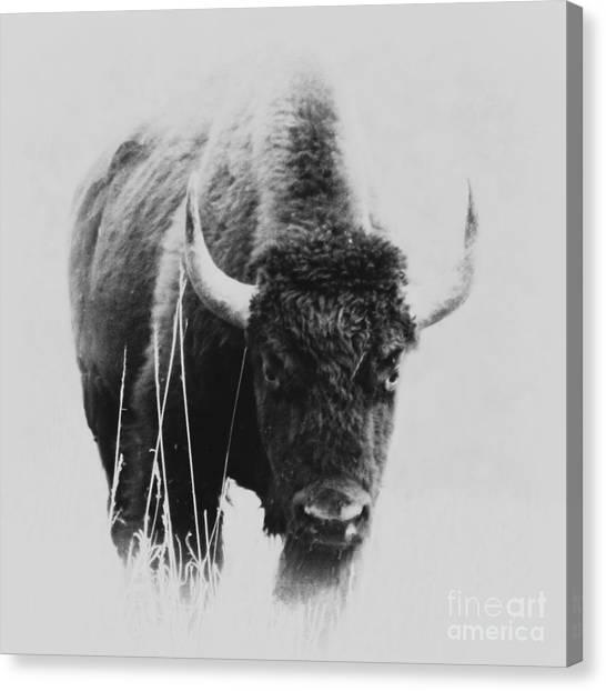 Buffalo Gal Canvas Print