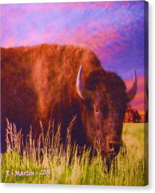 Buffalo Sunset Canvas Print