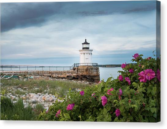 Bug Light Blooms Canvas Print