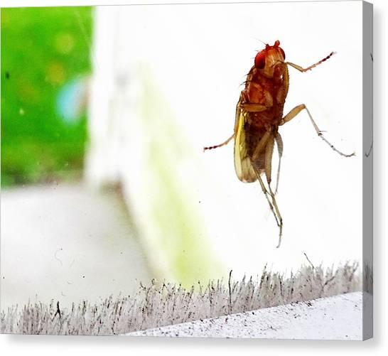 Bug On Window Canvas Print